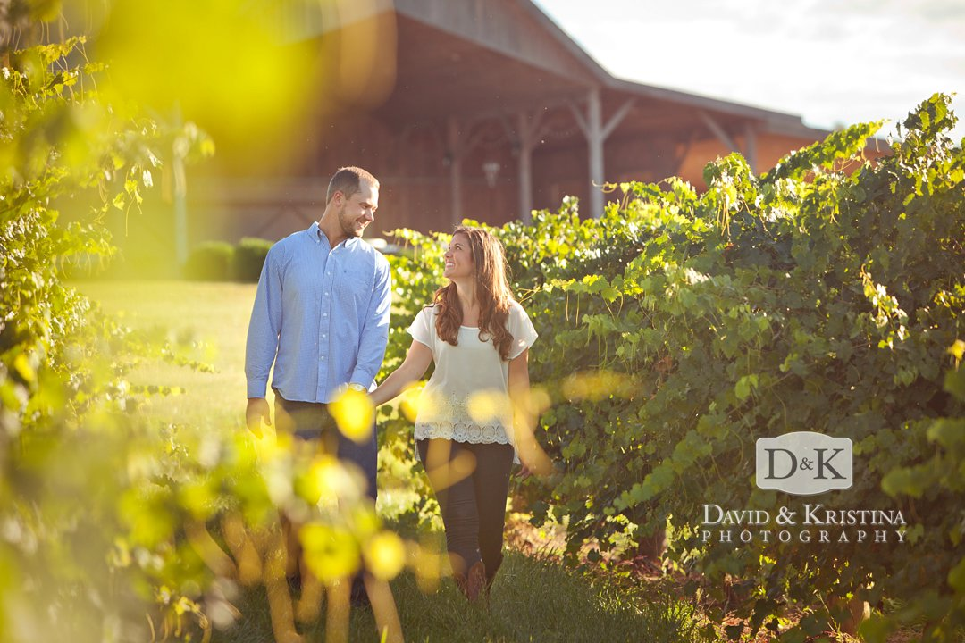 vineyard at Chattooga Belle Farm