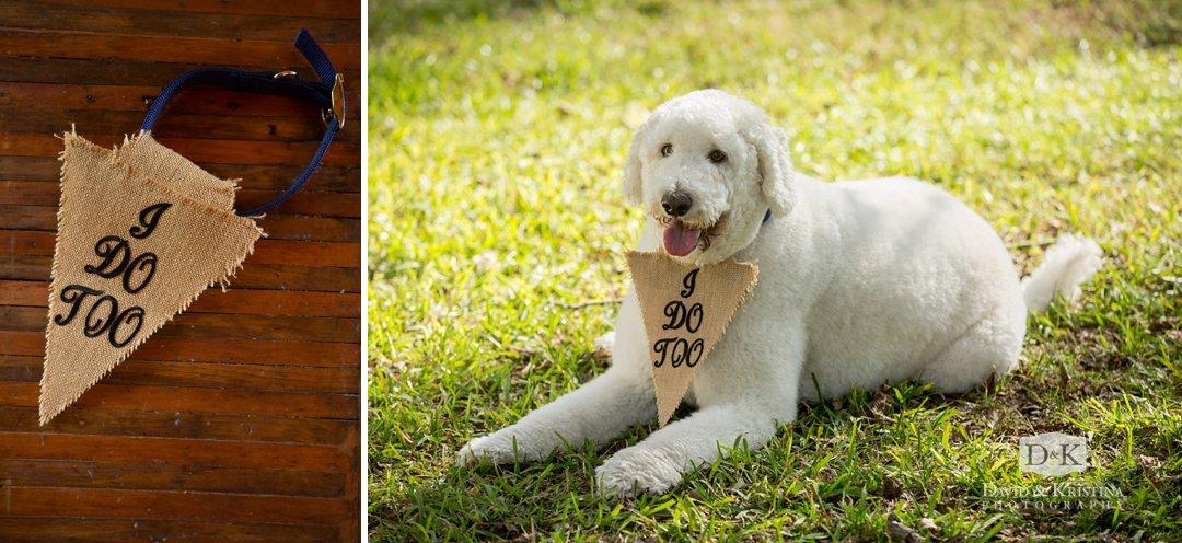 Dog wearing I do too collar